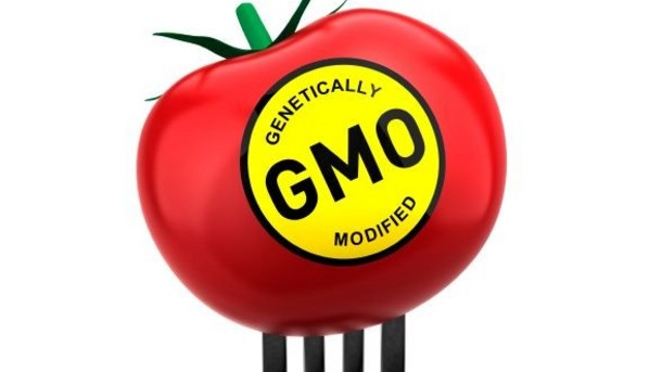 Genetically Modified Tomato